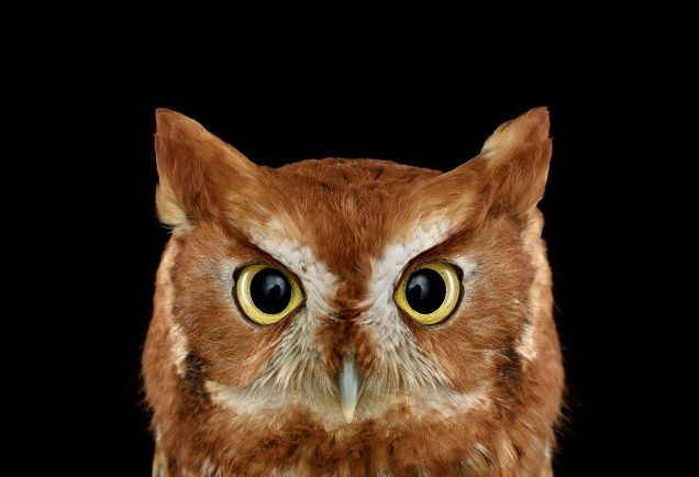 Take A Moment To Marvel At These Unusually Intimate Owl Portraits