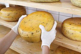 Van Gaalen Cheese Factory - Hartebeestpoort
