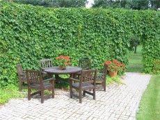 зеленый забор на дачном участке