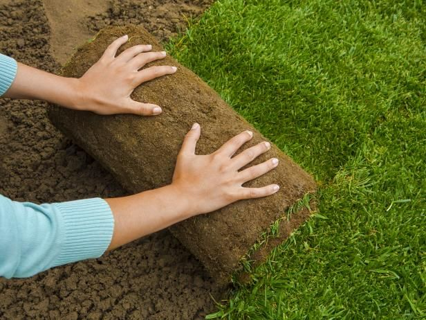 How To Install Sod Drought Tolerant Grass Lawn Lawn Care