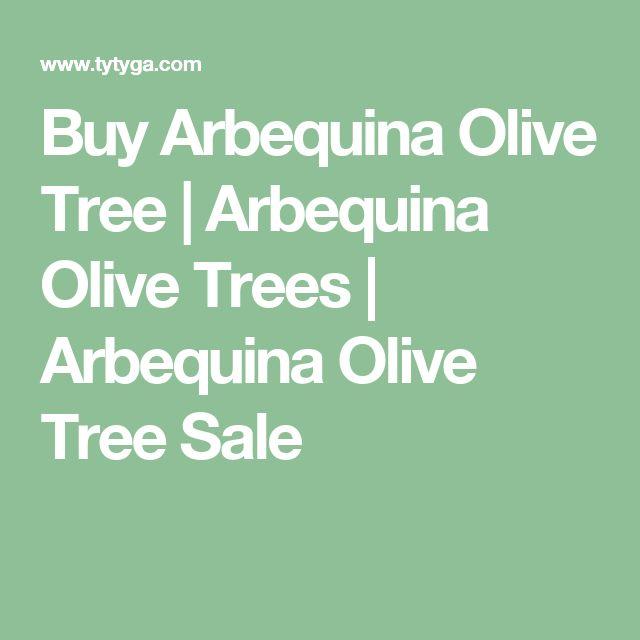 Buy Arbequina Olive Tree | Arbequina Olive Trees | Arbequina Olive Tree Sale