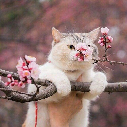 cat, flowers, and animal-bild