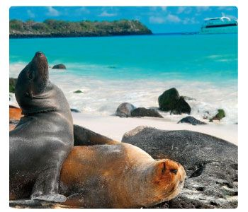Luna de miel en islas Galapagos. Galahost #honeymoon #lunademiel #galapagosislands #islasgalapagos #ecuador #southamerica #galahost #destinationhoneymoon #destinolunademiel