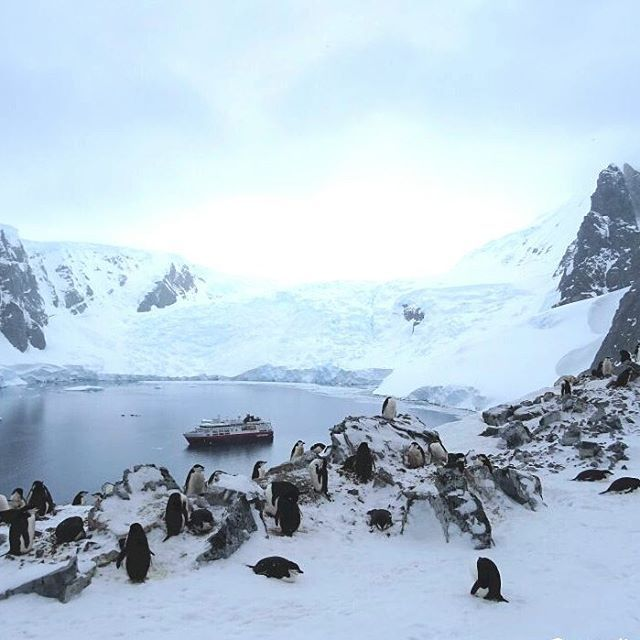 Chinstrap penguin nesting in orne harbour. Fascinating how these small creatures climb up this high  . . . #chinstrappenguin #zügelpinguin #pinguin #penguins #antarctica #antarktis #pinguino  #wildlifephotography #reiseblogger_de  #wildlifeaddicts #wildlife_seekers #wildlifeonearth #instawildlife #naturelovers #adventure #ig_penguin #discoverearth #natgeotravelpic #birdsofinstagram #majestic_earth #explore #collectmomentsnotthings #travelblogger #msfram #hurtigruten #picoftheday #snowyday…