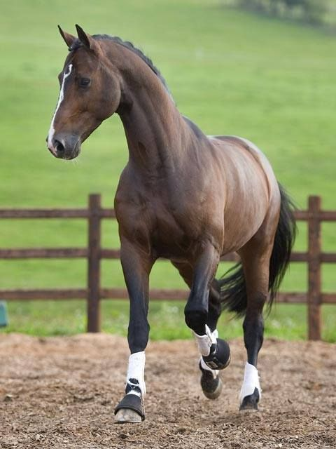 """equestrian-vibes: """"Facebook na We Heart It. """""""