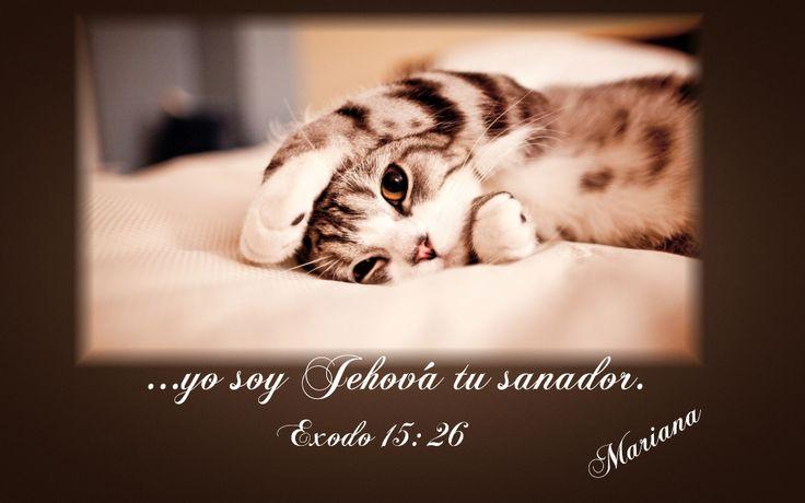 Donde está Dios hay sanidad. Donde está Dios hay salud, donde está Dios hay vida, donde está Dios hay abundancia, y por eso Él les dijo aquí 'Yo soy Jehová, tu sanador.