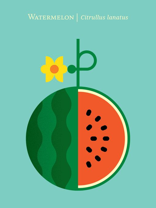 """Chris Dina: Fruit Prints Designer Chris Dina has created a vibrant new print series that celebrates """"wondrous varieties of fruit"""" through colorful, graphic illustrations. All of the prints will soon be available on Chris's Society6 shop, but for now, you can get a closer look and check out the rest of the designs right here."""