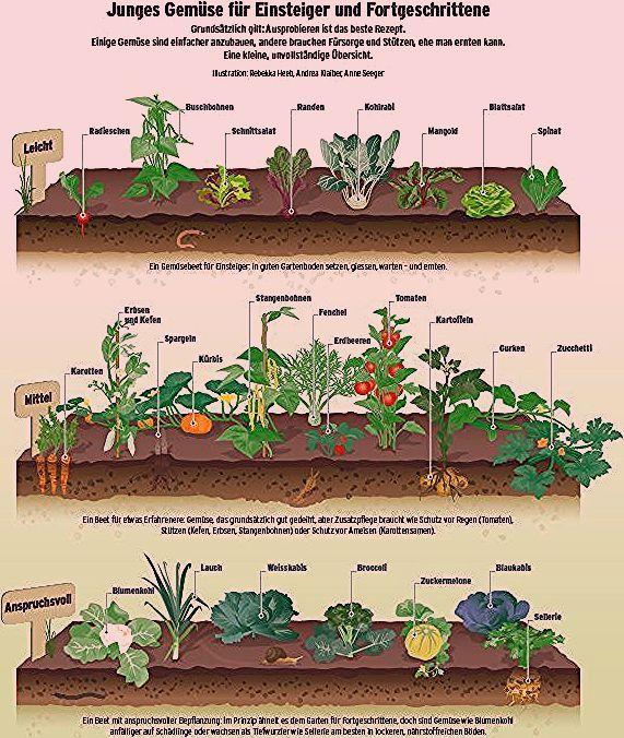 Gemuse Im Garten Anbauen Fruchte Im Garten Garten Hinterhof Garten Ideen Bonsai Pflanzen