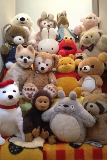 Find Shunsuke