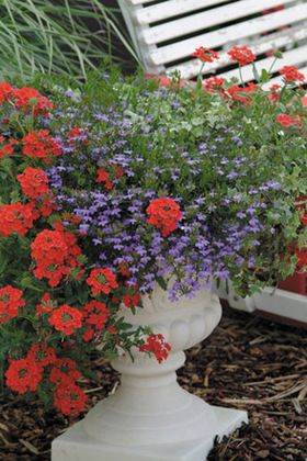 Patriotic Container Garden Scarlet Flare - Patriotic container garden