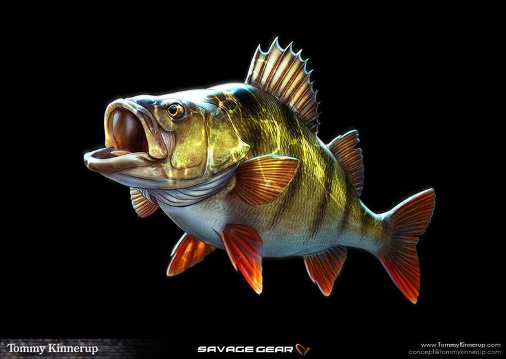 231 best images about bass fishin art for Big fish tackle