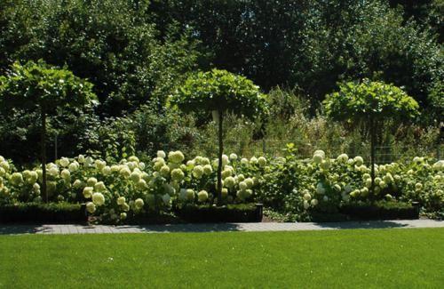 Gärten und Projekte Auswahl - Pflanzungen - Referenzen - Mueller Dams