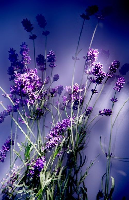 ❤ ❤ ❤ rich shades of purple