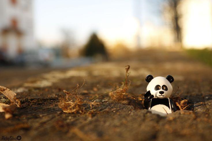 https://flic.kr/p/HVxH3c | [Real World] (44) Panda Guy  #Canon #Comunidade 0937 #Photography #LegoPhotography #LegoMinifig #Lego #Minifig #Minifigures #Legos #PhotographyLego