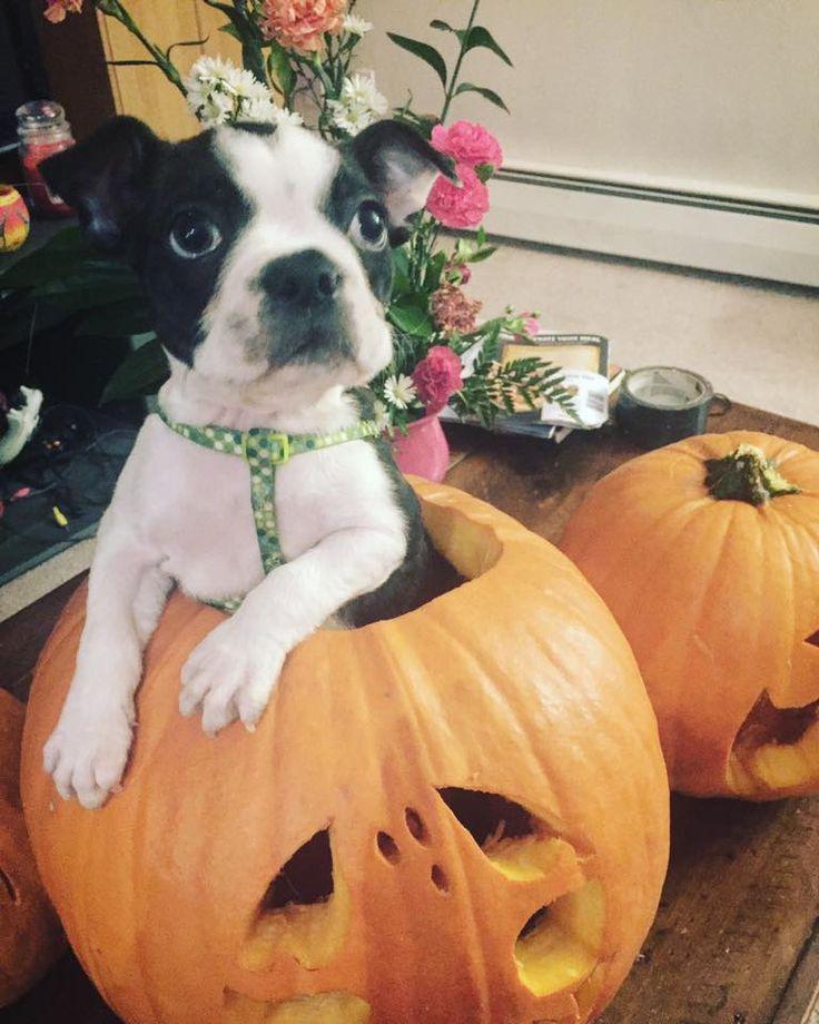 Hawthorne as Halloween itself!