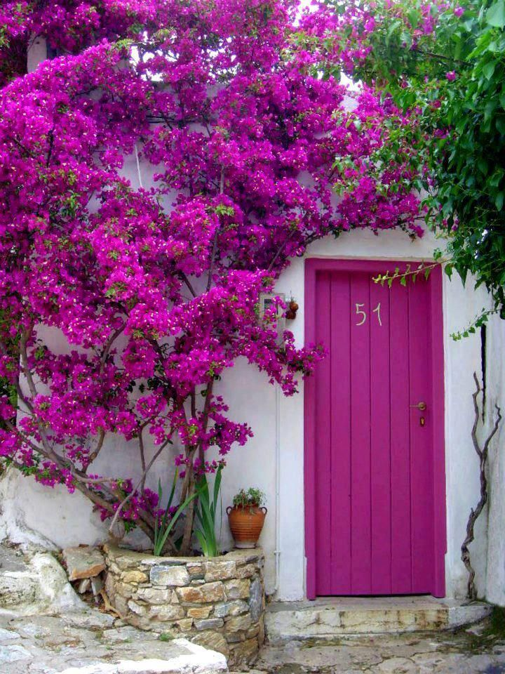Beautfiul bougainvillea flowers perfectly match the front doors. Get the look with Dunn-Edwards Razzle Dazzle DE5027 for your doors.