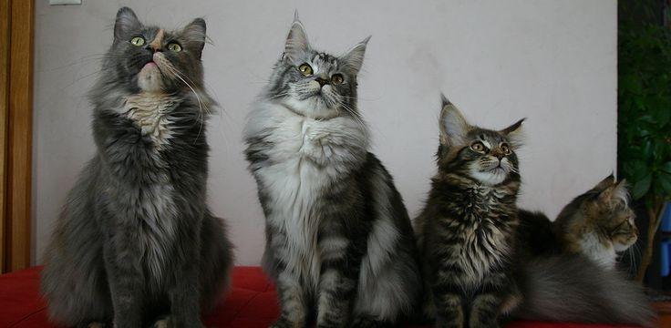 cattery-adienieknl | Showresultaten