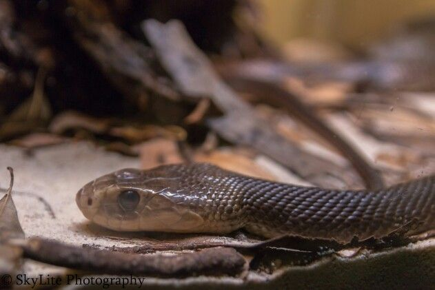 Snake-neck