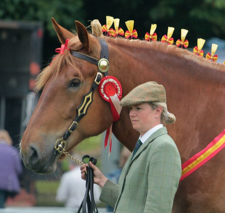 Suffolk Punch-From Wiki-English breed draft horse always chestnut, from county of Suffolk, Punch from solid appearance and strength, good doers, energetic gait especially trot, pulled artillery, commercial vans & buses, used in forestry, advertising, crossbreeding, farm work