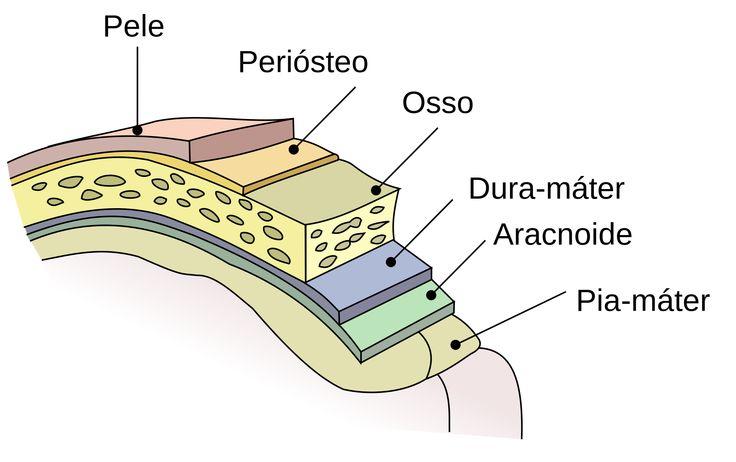 Quais as barreiras anatômicas que devem ser transpostas para se chegar ao cérebro? Este artigo trata da neuroanatomia do revestimento cerebral.