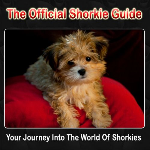 Shorkie puppies,Shorkie,Shorkie Puppies For Sale,Shorkie Breeder | pricelesspups.net