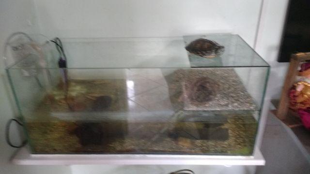 Tartaruga e aquário completo