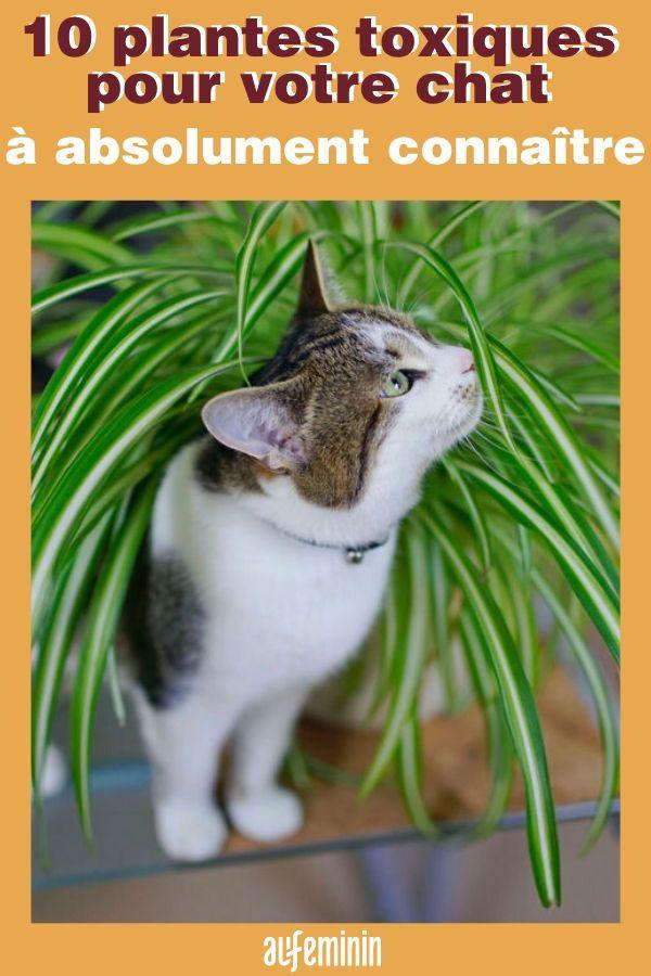 Ces 10 Plantes Toxiques Pour Votre Chat A Absolument Connaitre En