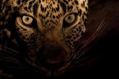 Planet Earth II unveils stunning imagery of Leopards hunting in Mumbai's urban sprawl. Read more here: