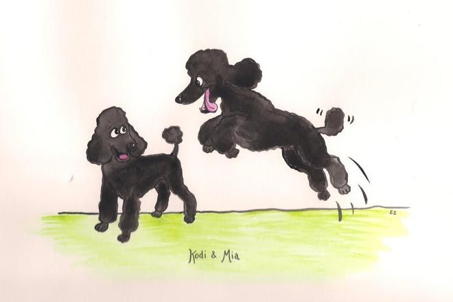 caricature artist sketching poodle - Google Search