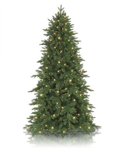 Addison spruce trees christmas and lush