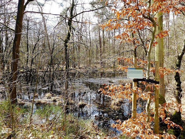 Wandelen Bij Achtmaal Noord Brabant Natuur Nederland Nature