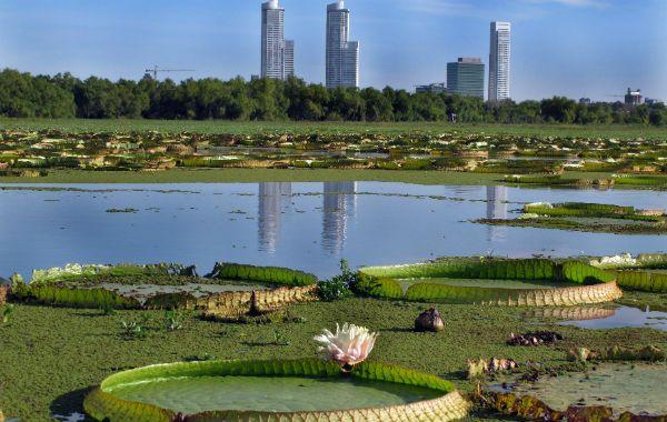 Las 25 mejores ideas sobre plantas acuaticas en pinterest for Estanques en argentina