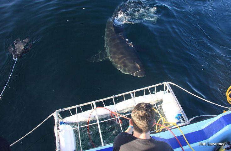 "AIRJAWS Shark Trip – ""Amazing trip! Would definitely do again!"""
