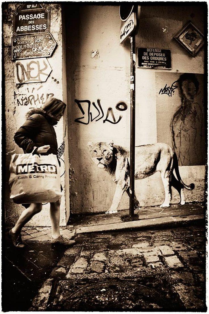 Une street artist colle des animaux sauvages dans les rues de Paris…  #streetart jd