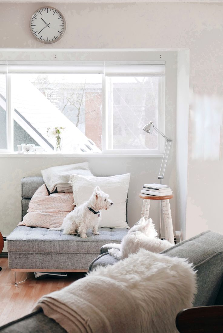Westies in the new apartment  | Follow The Westie Besties on Instagram: http://www.instagram.com/thewestiebesties | Photo by Katherine Penfold | #WestHighlandTerrier #Westies #WestHighlandWhiteTerrier #Dogs #Pets #WestieBesties #decor #white #condo #midcentury #modern #century