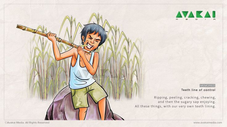 Sugar Cane Eating | Kids art projects, Childhood memories ...