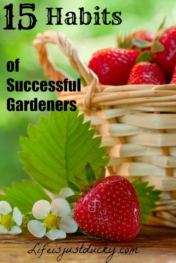 We all want to be better gardeners, so what are the habits that successful gardeners do that make them so successful. #7 & #11 are very important.