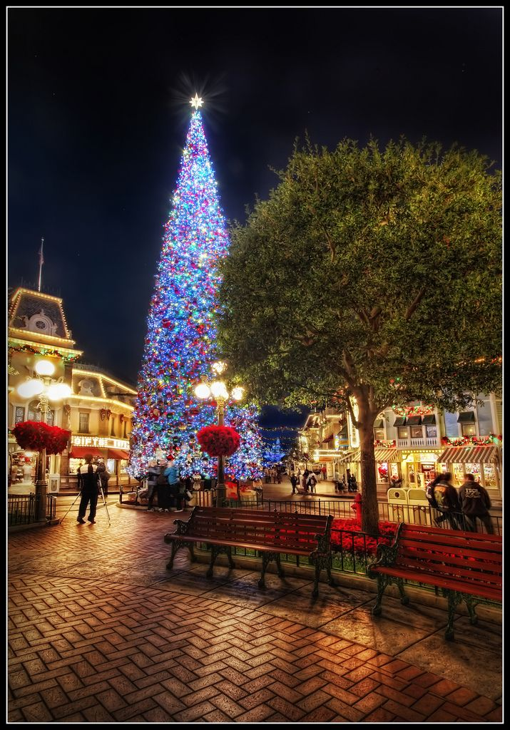 Disney Christmas....nothing quite like it in the world!!: