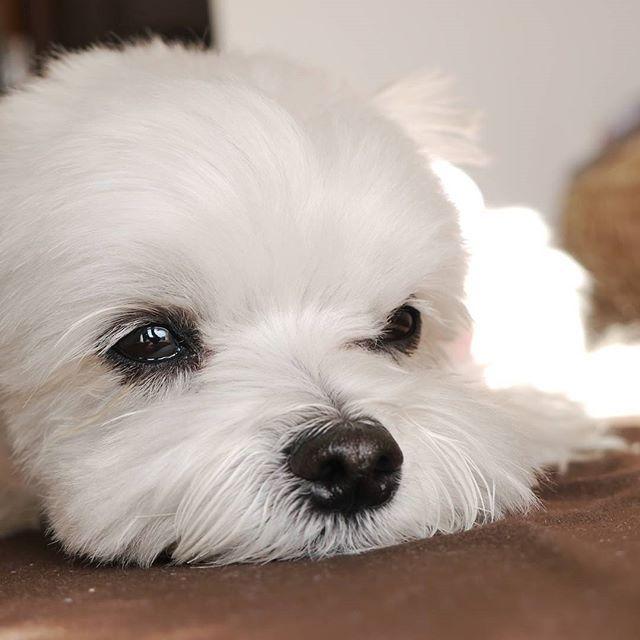 Awe looks like my little Max ❤️