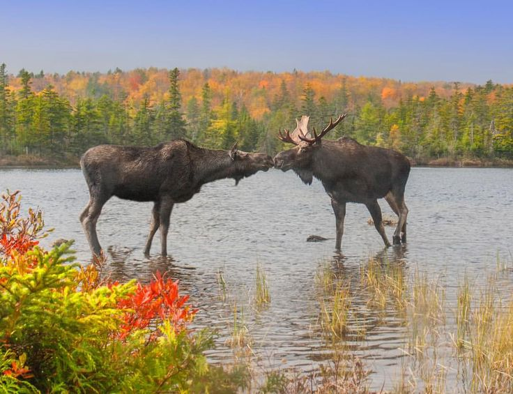 Date night in Baxter State Park, Maine
