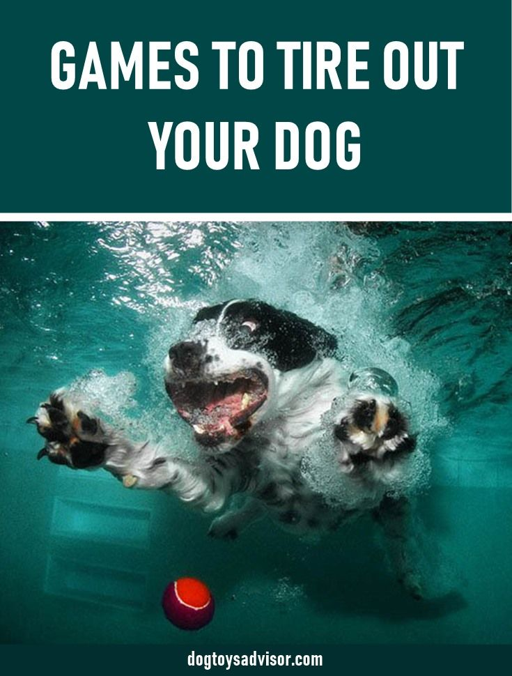 Here S 15 Fun Games To Tire Out Your Dog Dogs Need Physical And
