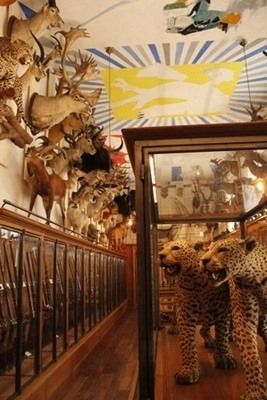Museum of Hunting and Nature (Musée de la Chasse et de la Nature) | Atlas Obscura