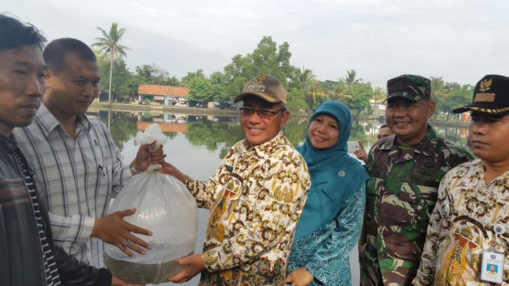 update Pemkot Depok Tebar 100 Ribu Benih Ikan Di Tiga Situ
