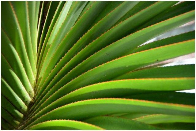 Géobiologie et coévolution spirale de l'évolution à La Réunion