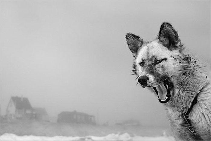 Ragnar Axelsson, Icelandic photographer.