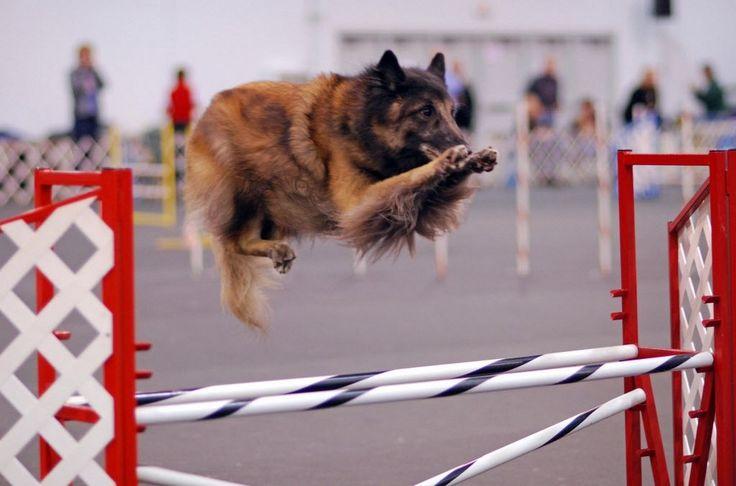 salto belga Tervuren