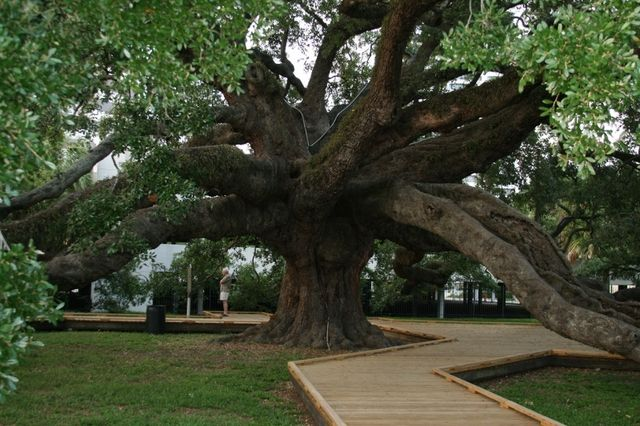 Wonderfully Free Things to Do in Jacksonville, Florida: Movies in the Park