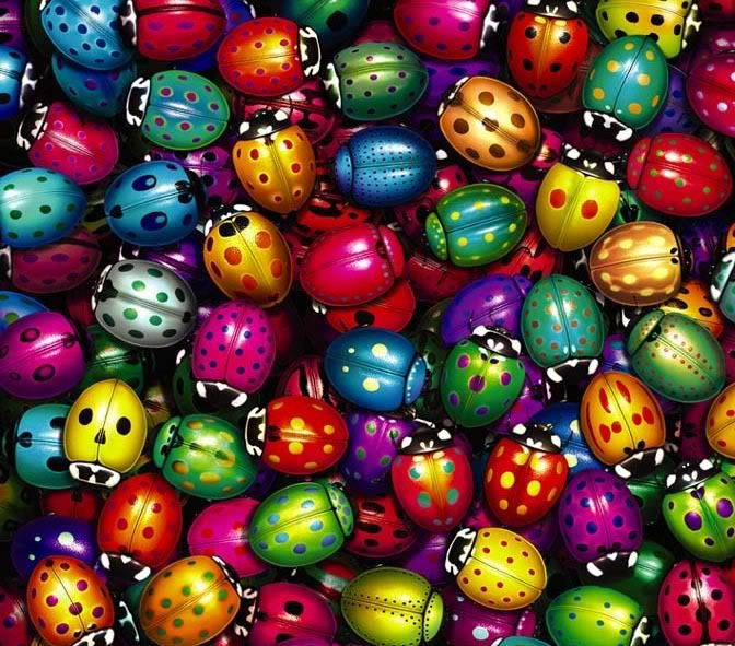 Ladybugs! Photo:  This Photo was uploaded by hulababe723. Find other Ladybugs! pictures and photos or upload your own with Photobucket free image and vid...