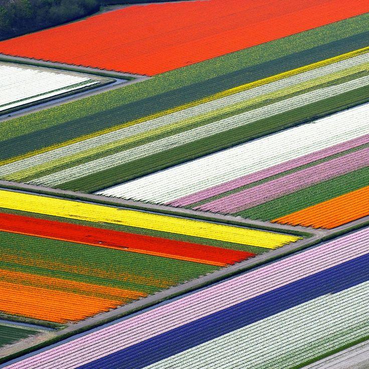 Anna Paulowna Fields, The Netherlands