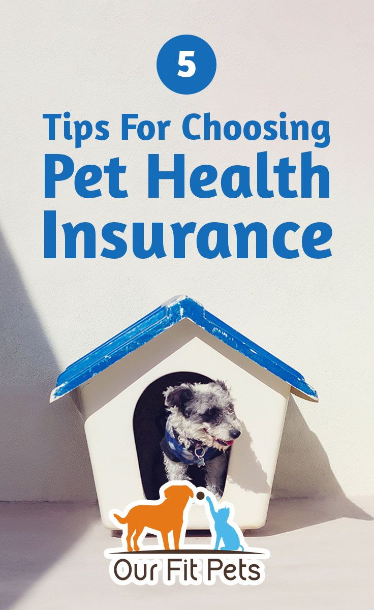 5 Tips For Choosing Pet Health Insurance Pet Health Insurance